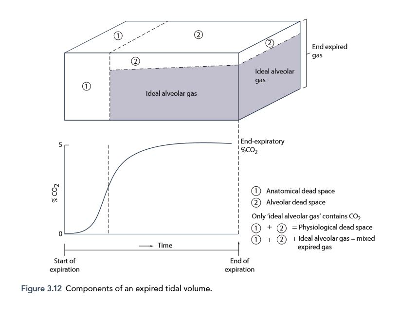 Components of an expired tidal volume from Kam & Power 3rd ed