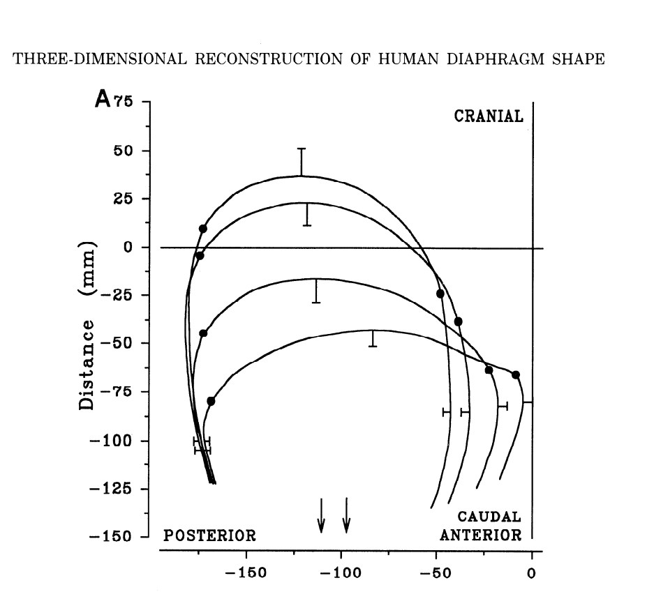 Three-dimensional reconstruction of human diaphragm shape from Gautheir et al (1994)