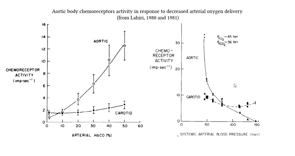 aortic body chemoreceptor response to carboxyhaemoglobin and hypotension