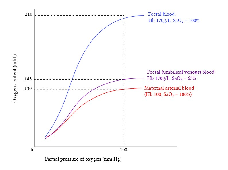comparison%20of%20foetal%20and%20maternal%20blood%20oxygen%20content%20from%20Brandis3_0.jpg