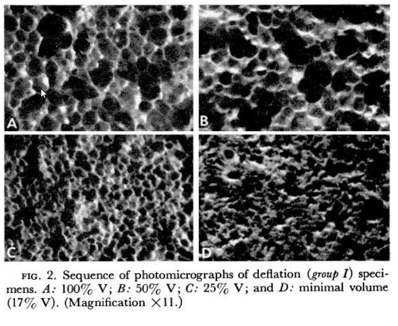 deflating cat alveoli from Klingele & Staub (1970)