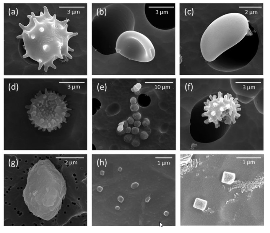 examples of airborn particles (SEM microphotography)