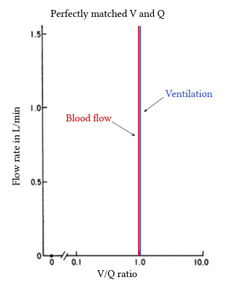 perfectly matched ventilation and perfusion in a thought experiment
