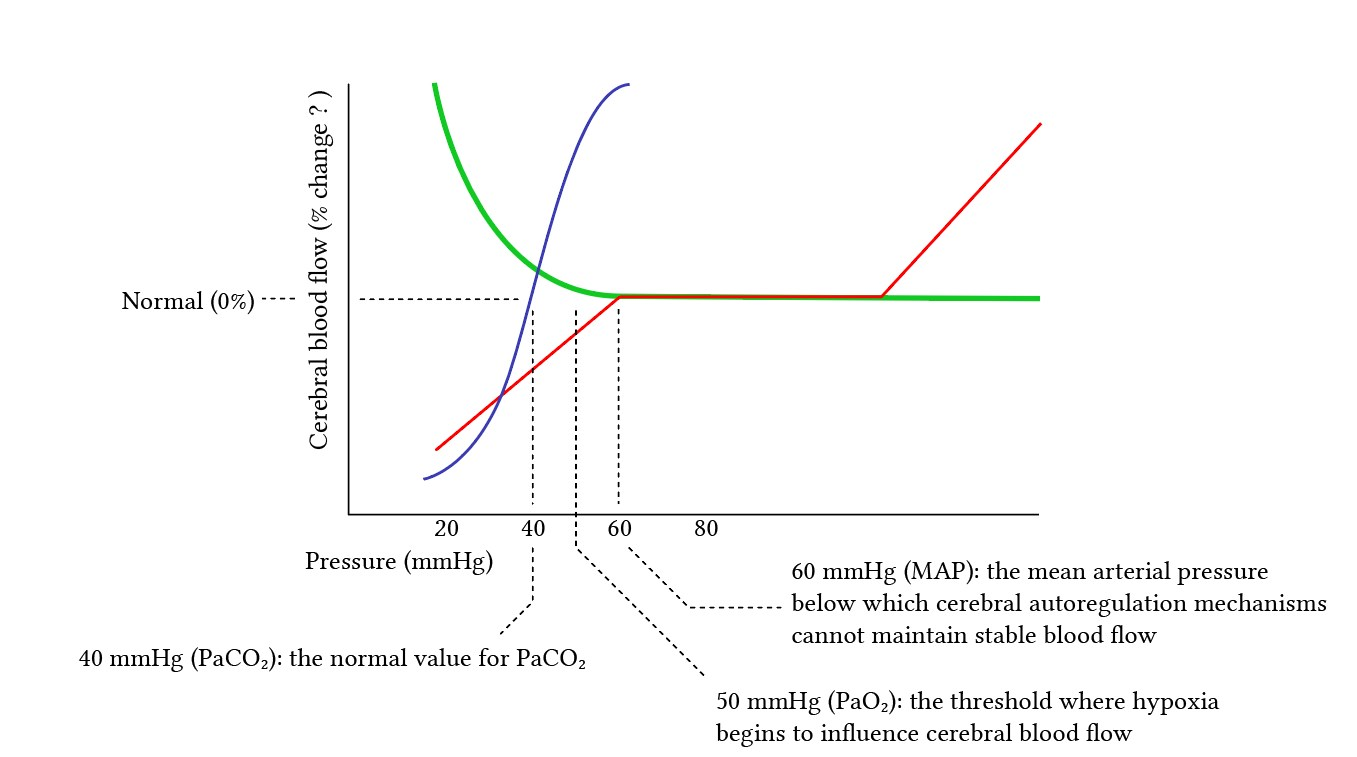 relationship of MAP, O2 and CO2 effects on cerebral blood flow