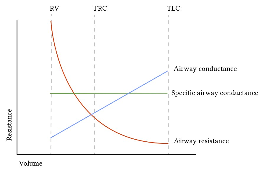 relationship of lung volume, airway resistance and airway conductance