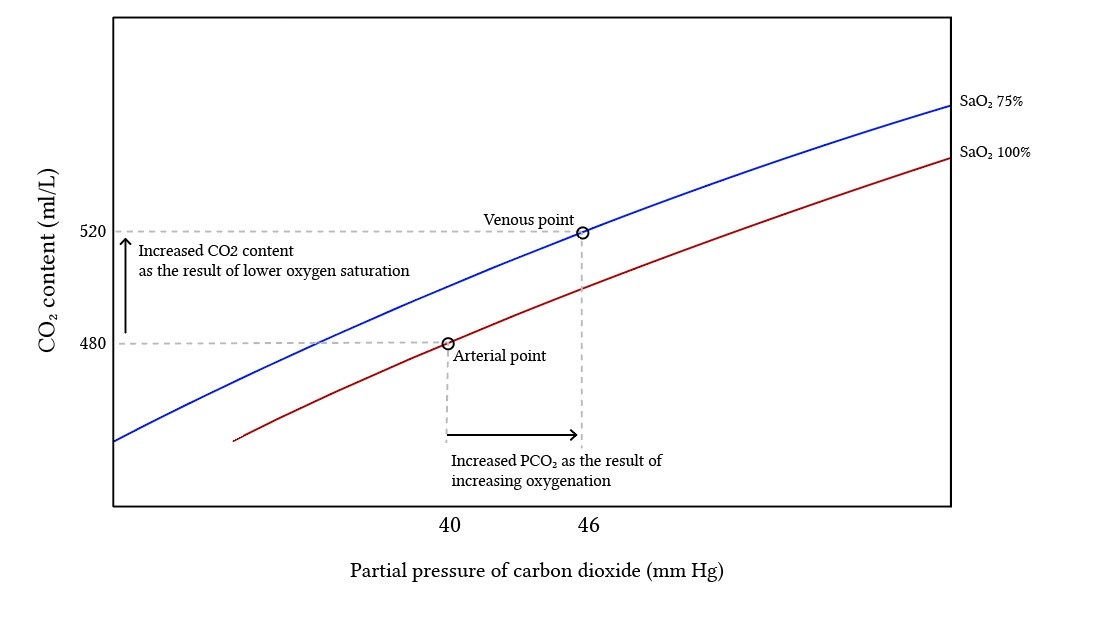 the important parts of the carbon dioxide dissociation curve