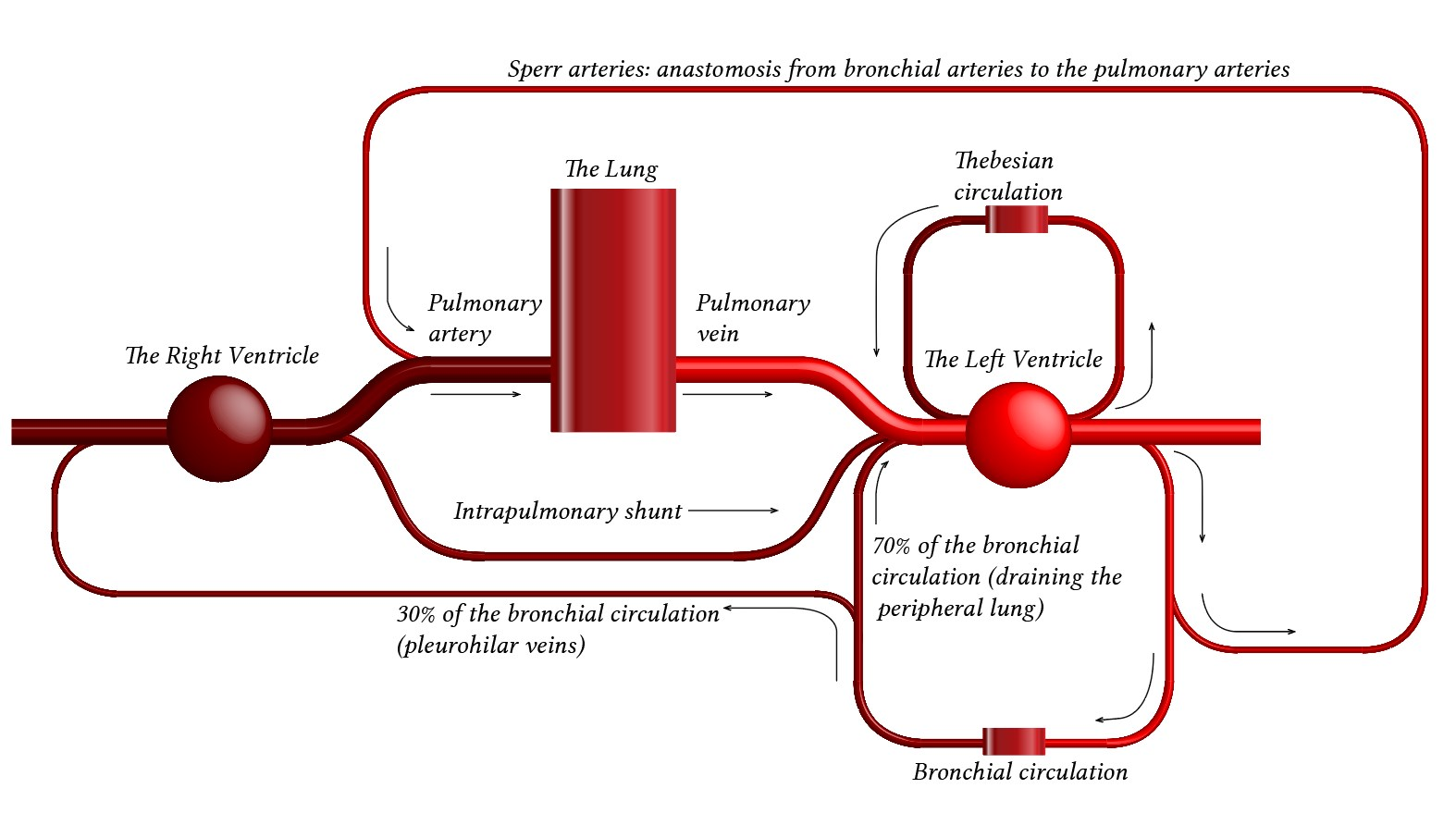 tube-like map of the pulmonary circulation