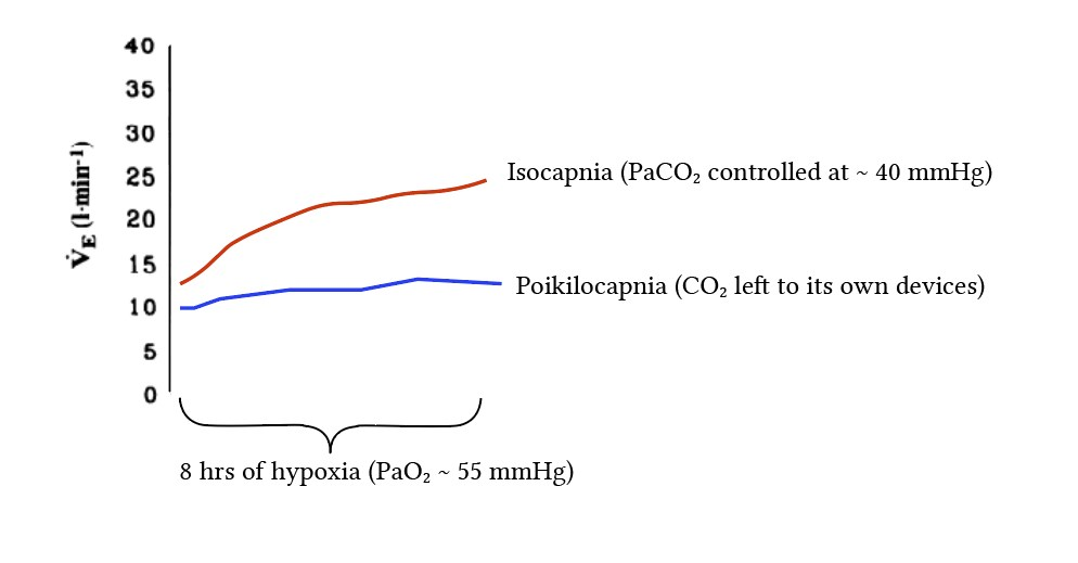 ventilatory responses to isocapnic and poikilocapnic hypoxia from Howard and Robbins (1995)