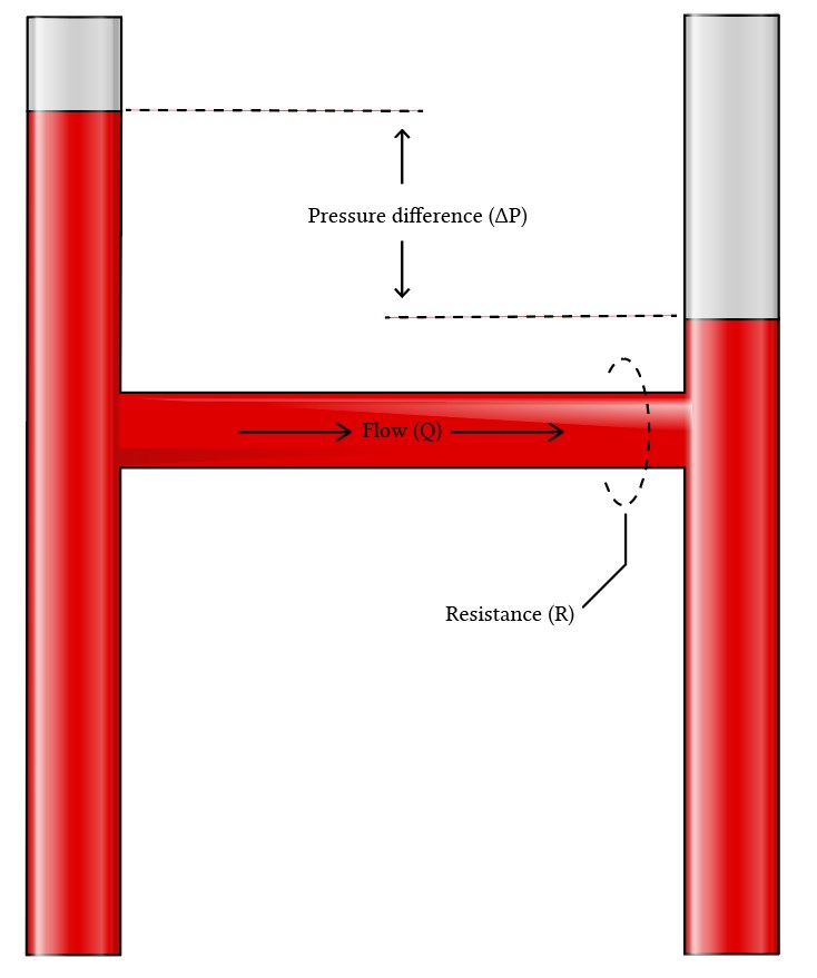 PA catheter - physical basis of the wedge pressure
