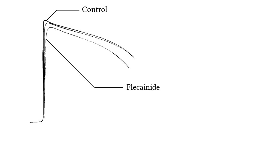 The effect of flecainide on the duration of Phase 0, from Borchart and Boisten (1982)