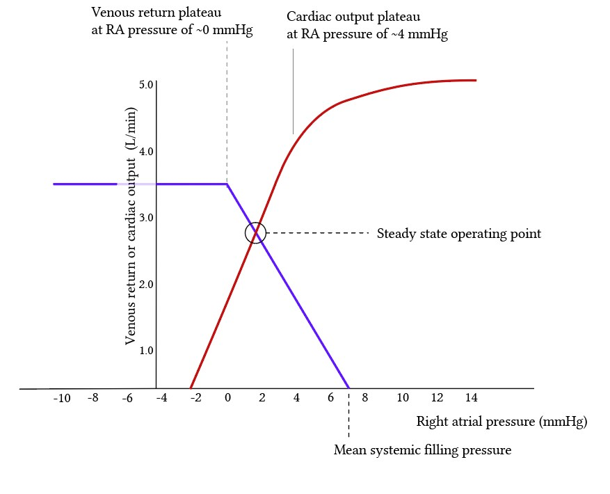 cardiac and vascular function curves superimposed