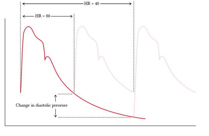 change in diastolic pressure due to heart rate.jpg