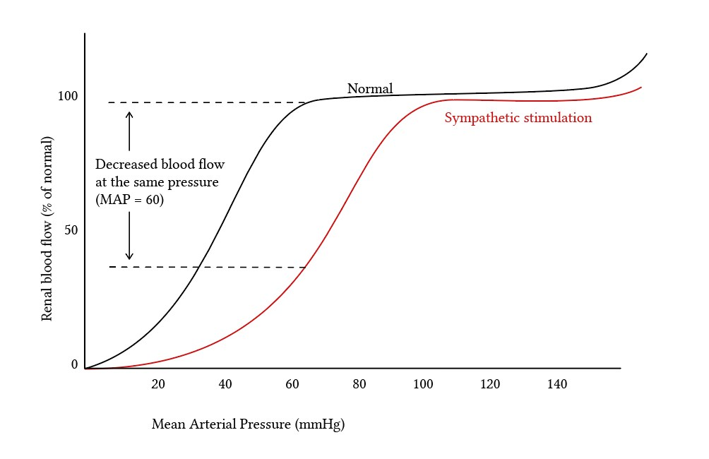 change in renal blood flow due to sympathetic activation