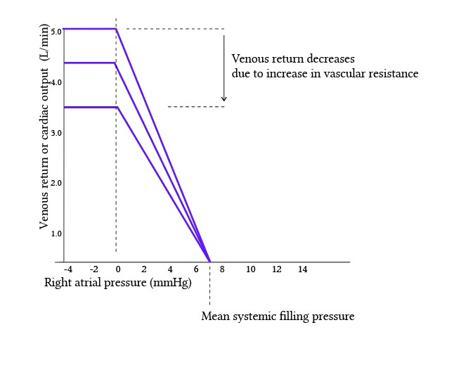 increased venous return with decreased vascular resistance