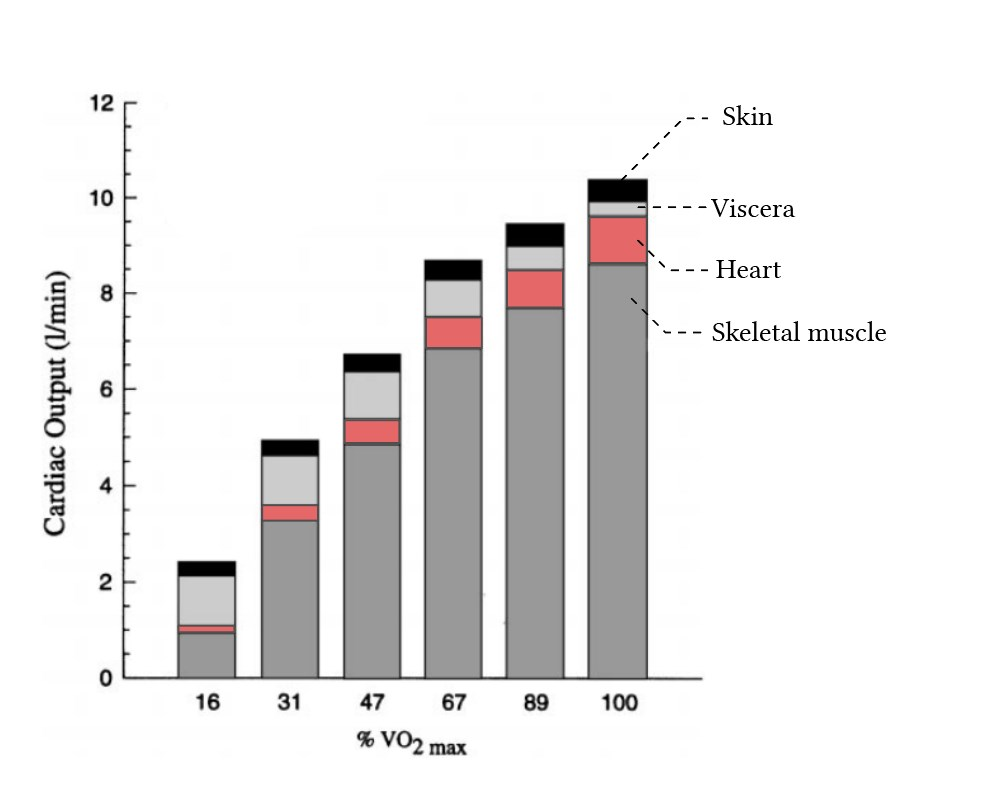 relationship between exercise intensity and distribution of cardiac output
