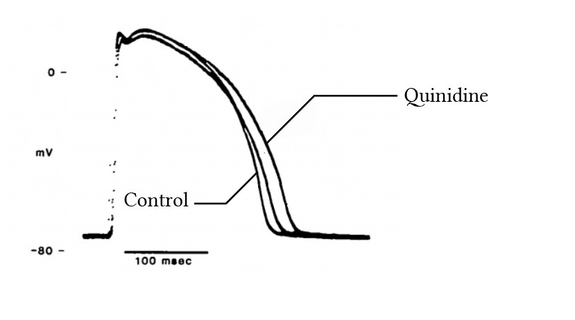 the effect of quinidine on the cardiac action potential, from Salata & Wasserstrom (1987)