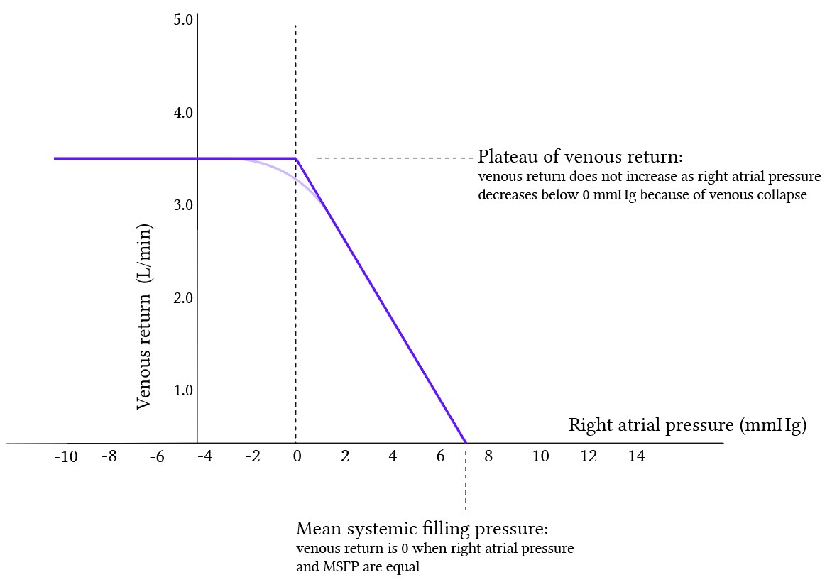 vascular function curve 2