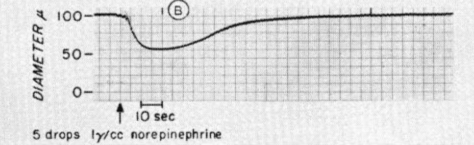vasoconstrictor response to drops of noradrenaline