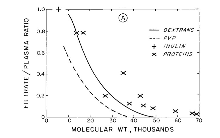 Glomerular filtration according to molecule size, from Robinson & Renkin