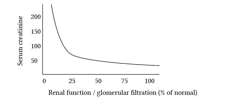 relationship of glomerular filration and serum creatinine