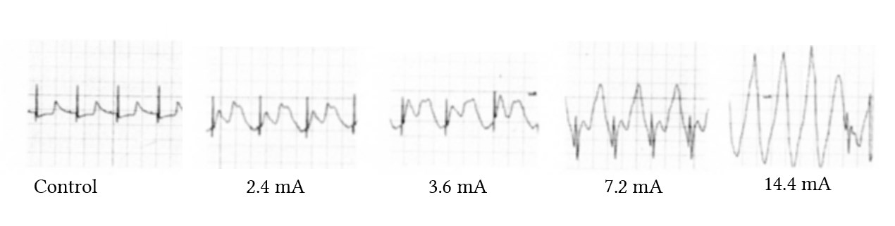 effect of catelectrotonus on guine pig hearts from Hohloser et al (1982)