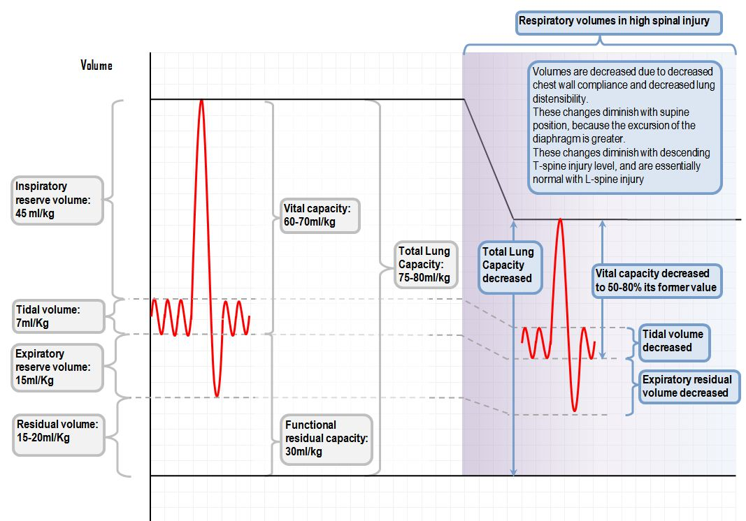 Respiratory volumes in high spinal injury