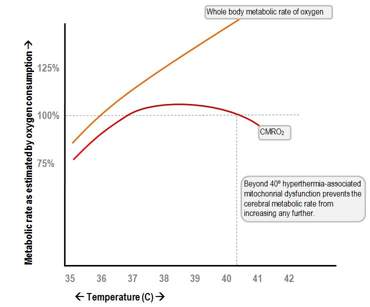 cerebral metabolic rate in hyperthermia